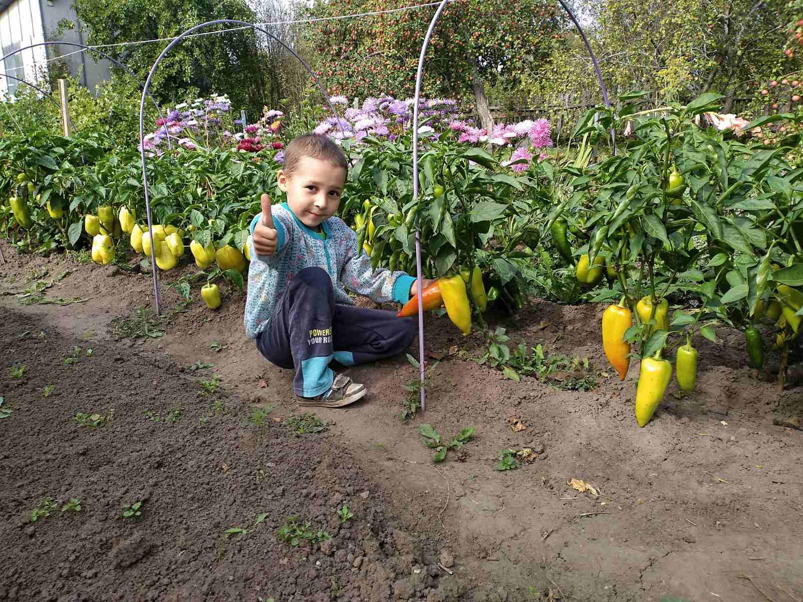 Урожай собирай – и на зиму запасай